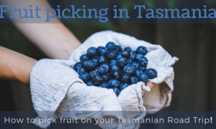 Fruit Picking in Tasmania: How to pick fruit on your Tasmanian Road Trip