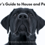 The Beginner's Guide to House and Pet Sitting: Everything you need to know!