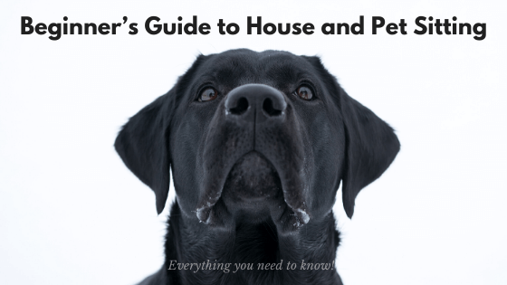 Beginner's Guide to House and Pet Sitting: Everything you need to know!