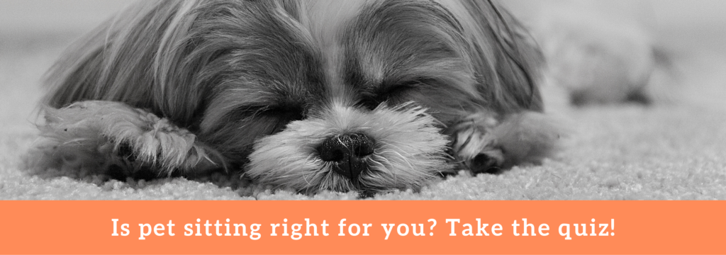 Take the easy pet sitting quiz