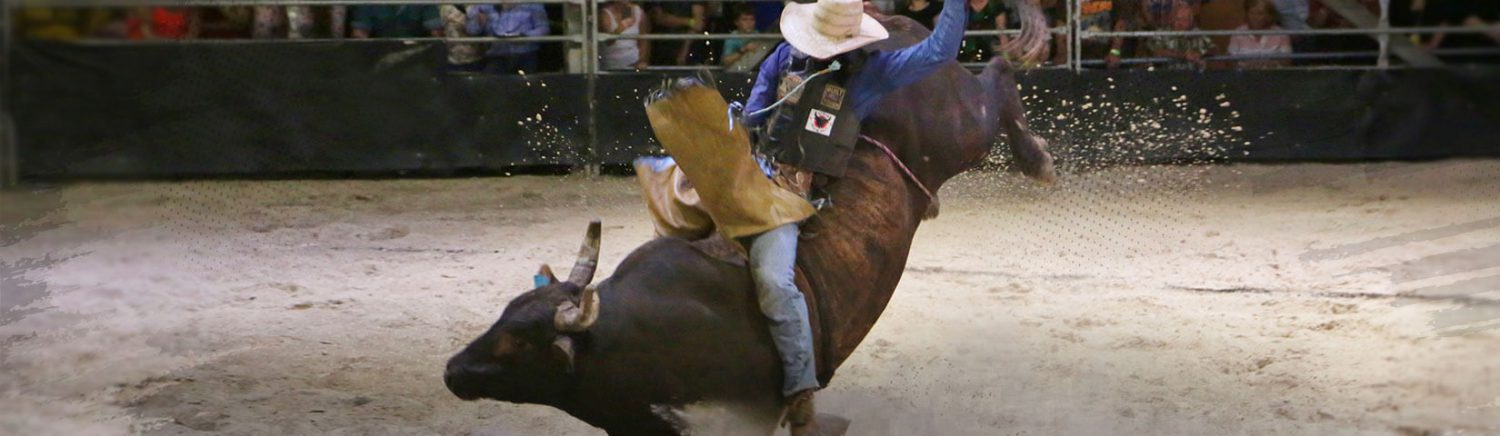 Fun things to do in Rockhampton: Bull Riding & Texas Bar-B-Q
