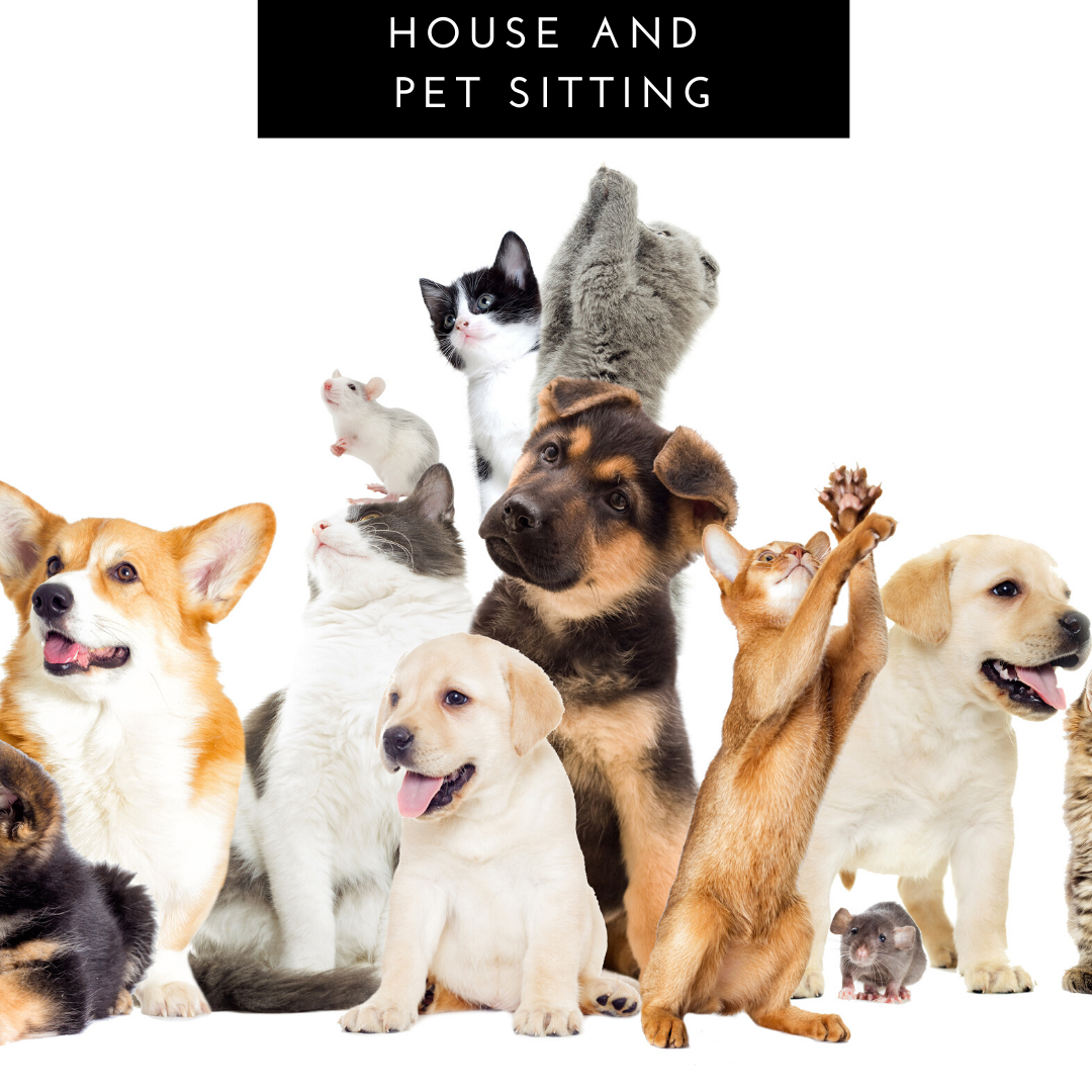 Click for House and Pet Sitting