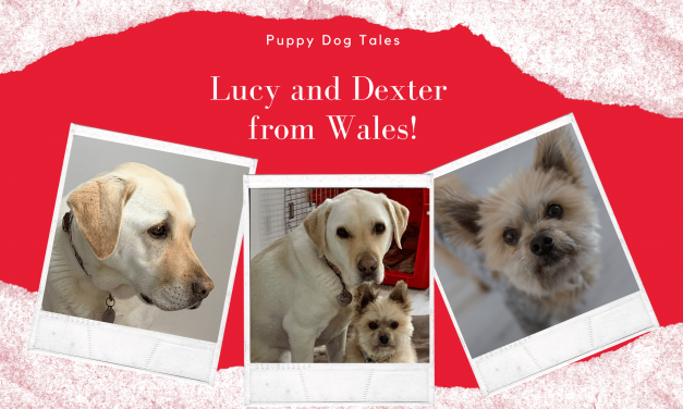 LUCY and Dexter from Wales