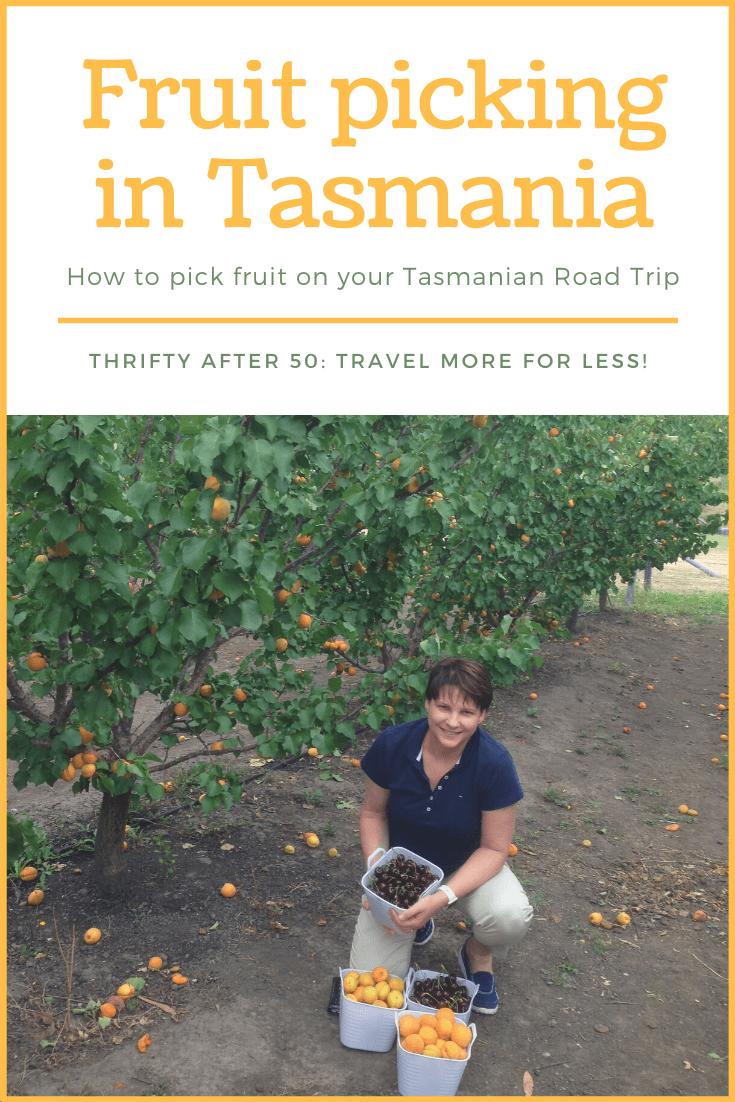 Fruit picking in Tasmania